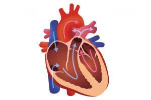 علاج امراض صمامات القلب